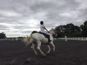 Equestrian first aid providers Hertdordshire